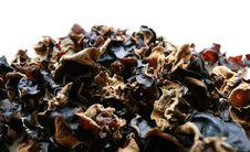 Wood Ear Mushroom Stock Image