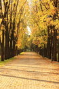 Free Autumn Alley In The Park Royalty Free Stock Images - 16681429