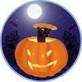 Free Cat In A Pumpkin Stock Image - 16682501