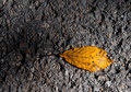 Free Autumn Leaf Stock Photography - 16685472