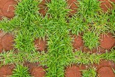 Free Grass Brick Royalty Free Stock Image - 16680776