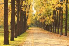Free Autumn Alley In The Park Stock Photos - 16681383