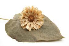 Free Dry Flower Royalty Free Stock Photos - 16681738