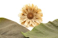 Free Dry Flower With Fall Royalty Free Stock Photos - 16681788