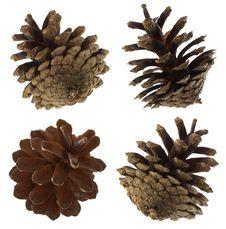 Free Pine Cones Set Stock Image - 16681891