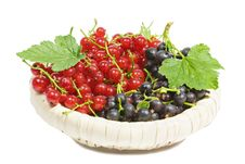 Free Black And Red Currants Stock Photos - 16684473