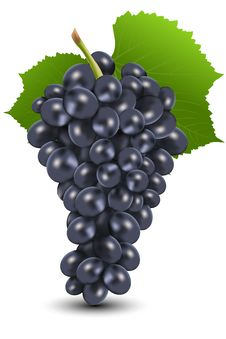 Free Bunch Of Black Grapes Stock Photo - 16684750