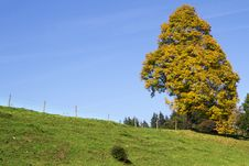 Single Tree On A Meadow In Bavaria Royalty Free Stock Image