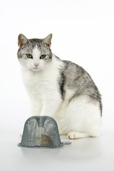 Free Cat Hunt Quarry Mice To The Traps. Royalty Free Stock Photos - 16687768