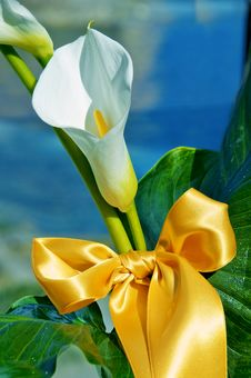 Free Calla Bow Stock Photos - 16687873