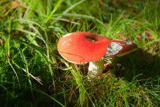 Free Russule Mushroom Royalty Free Stock Photo - 16687885