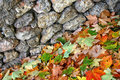 Free Wall & Leaves Stock Photo - 16693520