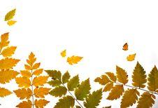 Autumn Leaves Backlit Diagonal Stock Images