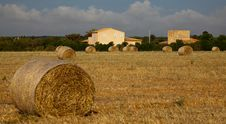 Free Majorcan Agriculture Royalty Free Stock Image - 16690666