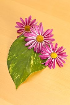 Free Three Purple Flowers Stock Photography - 16690992