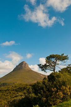 Free Lions Head Part Of Table Mountain Stock Photos - 16691203