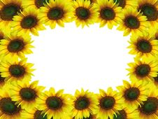 Free Beautiful Sunflower Frame Royalty Free Stock Photography - 16692157