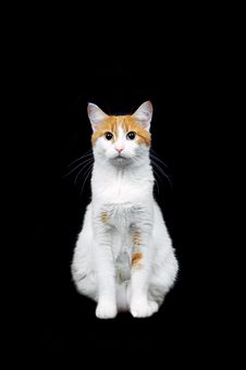 Free Red And White Cat On Black Stock Photo - 16693260