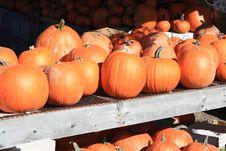 Free Pumpkins Stock Photo - 16694410