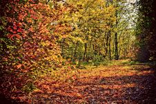 Free Autumn Royalty Free Stock Images - 16696949