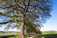 Oak Avenue In Autumn Royalty Free Stock Images
