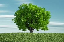 Free Grass And Tree Royalty Free Stock Image - 16697296