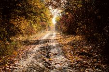 Free Autumn Royalty Free Stock Images - 16697299