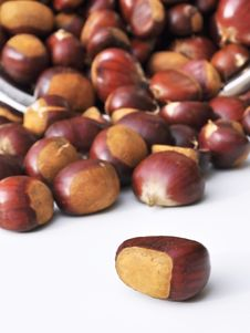 Free Chestnut Reversed Stock Images - 16697894