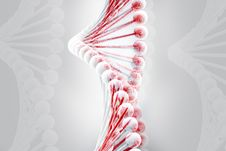 Free Dna Stock Image - 16698561