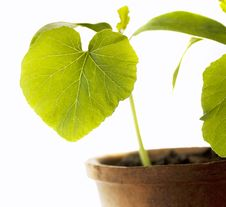 Free Leaf Young Plants Stock Photography - 16698622