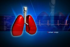 Free Human Lungs Royalty Free Stock Photos - 16698928