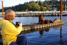 Free In Astoria Oregon Sea Lions. Stock Photography - 16699072