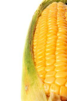 Free Corn Royalty Free Stock Photo - 16699355