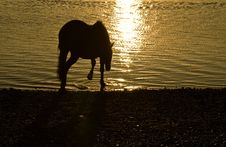Free Horse In Silhouette. Stock Image - 16699361