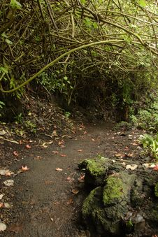 Free Waianapanapa Loop Trail Royalty Free Stock Photos - 1670798