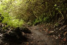 Free Waianapanapa Loop Trail Stock Photography - 1670802