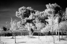 Infrared Scene Stock Images
