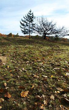 Free Autumn Grassland Royalty Free Stock Photo - 1671575