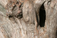 Free Hole In Tree Stock Photography - 1673082