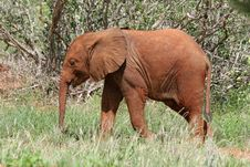 Free Elephant Calf Royalty Free Stock Images - 1674389