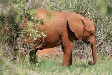Free Elephant Stock Photos - 1674393