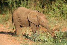 Free Baby Elephant Stock Images - 1674494
