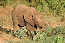 Free Baby Elephant Stock Photo - 1674500