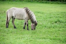 Free Danish Horses 01 Royalty Free Stock Photos - 1677568