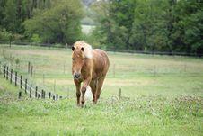 Danish Horses 01 Stock Image