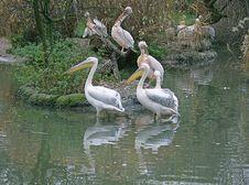 Pelican Island 1 Stock Image