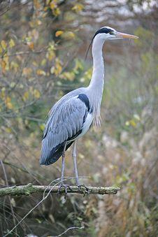 Free Heron 3 Stock Image - 1677941