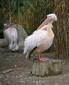 Pelican Island 6 Stock Photography