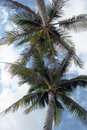 Free Palm Trees And Blue Sky Stock Photography - 16705642
