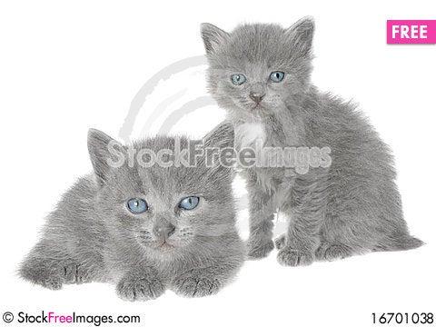 Free Kittens. Royalty Free Stock Photos - 16701038